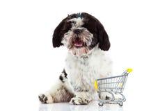 Shih tzu z zakupy trolly odizolowywającym na białym tło psie fotografia royalty free