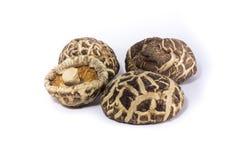 shiitake высушенных грибов Стоковые Изображения