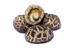 shiitake высушенных грибов Стоковая Фотография RF