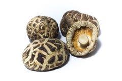 shiitake высушенных грибов Стоковое Изображение