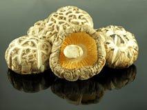 shiitake гриба Стоковые Фото