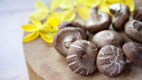 shiitake гриба Стоковые Изображения RF