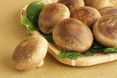 Shiitake. Japanese mushroom full of colander Stock Photography