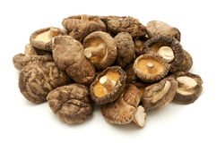 Shiitake Royalty Free Stock Photo