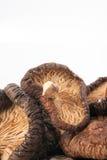 Shiitake Stock Image