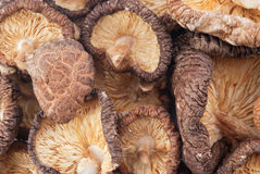 Shiitake Stock Photo