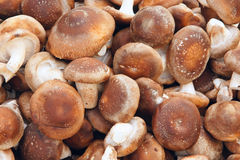 Shiitake Royalty Free Stock Photos