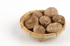Shiitake, Black Mushroom (Lentinus edodes (Berk.) sing. (Lentinula edodes (Berk.) Pegler). Royalty Free Stock Image