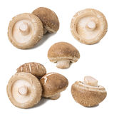 Shiitake collection in white background Stock Photography