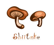 Shiitake Edible Mushroom Royalty Free Stock Image