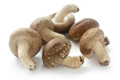 Shiitake, japanese mushrooms Stock Photos