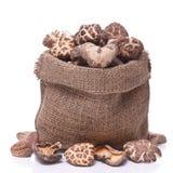 Shiitake mushroom Stock Image