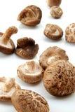 Shiitake mushroom Royalty Free Stock Image
