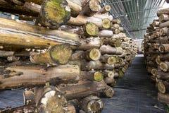 Free Shiitake Mushroom Growing In Wooden Logs Stock Image - 213539641