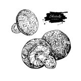 Shiitake mushroom hand drawn vector illustration set. Sketch foo Royalty Free Stock Images