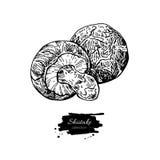 Shiitake Mushroom Hand Drawn Vector Illustration. Sketch Food Dr Stock Photo