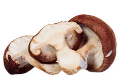 Shiitake mushroom isolated Royalty Free Stock Photo