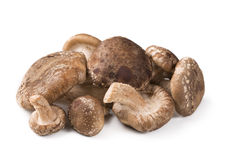 Shiitake Royalty Free Stock Images