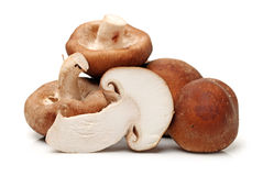 Shiitake mushroom Royalty Free Stock Photos