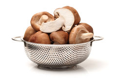 Shiitake mushroom Stock Images