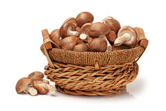 Shiitake mushroom Stock Photography