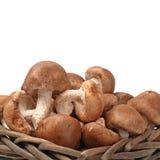 Shiitake mushroom Stock Photos