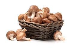 Shiitake mushroom Royalty Free Stock Photography