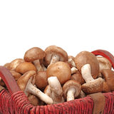 Shiitake mushroom Royalty Free Stock Photo