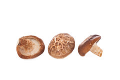 Shiitake mushroom on a White background Royalty Free Stock Photo