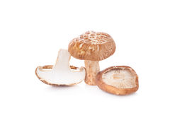Shiitake mushroom on a White background Royalty Free Stock Photos