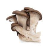 Shiitake mushroom on the White background Royalty Free Stock Images