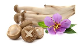 Shiitake mushroom on the White background. Food, fresh. royalty free stock photo