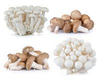 Shiitake mushroom and White beech mushrooms on White background Stock Photo