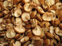 Shiitake mushrooms Royalty Free Stock Photography
