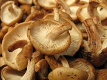 Shiitake mushrooms Stock Photos