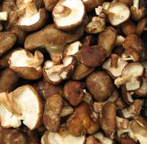 Shiitake mushrooms Royalty Free Stock Photo
