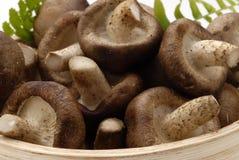 Shiitake mushrooms. Stock Images