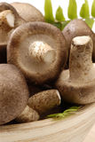 Shiitake mushrooms. Stock Images