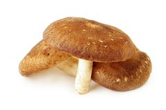 Shiitake Mushrooms Royalty Free Stock Photos