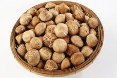 Shiitake mushrooms in basket Stock Images