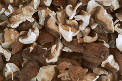 Shiitake mushrooms that are cut to the right size and dried in the sun. royalty free stock photos