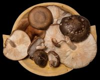 Shiitake mushrooms Royalty Free Stock Photography