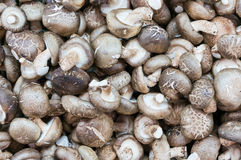 Shiitake mushrooms Royalty Free Stock Images