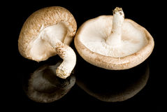 Shiitake Mushrooms Isolated on Black Stock Photography