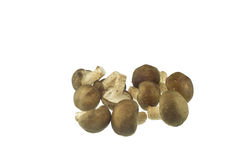 Shiitake mushrooms Stock Images