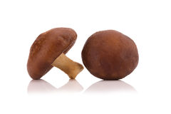 Shiitake Mushrooms isolated on the white background Royalty Free Stock Images