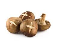 Shiitake mushrooms (Lentinula edodes). Royalty Free Stock Images