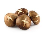 Shiitake mushrooms (Lentinula edodes). Stock Photo