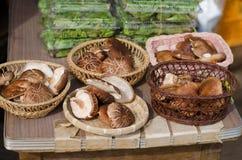 Shiitake mushrooms Royalty Free Stock Image