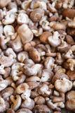 Shiitake mushrooms. A lot of shiitake mushrooms Stock Photo